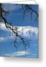 Mossy Branches Skyscape Greeting Card