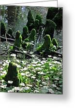Mossy Congregation II Greeting Card
