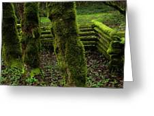 Mossy Fence Greeting Card by Bob Christopher