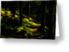 Mossy Forest Path Greeting Card