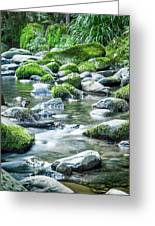 Mossy Forest Stream Greeting Card