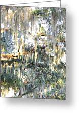 Mossy Live Oak Greeting Card