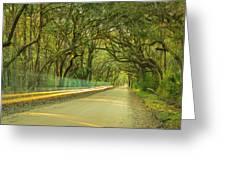 Mossy Oaks Canopy In South Carolina Greeting Card