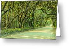 Mossy Oaks Canopy Panorama Greeting Card