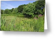 Mossy Pond Greeting Card by AnnaJanessa PhotoArt