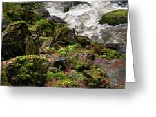 Mossy Rocks And Water Stream Greeting Card