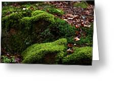 Mossy Rocks In Spring Woods Greeting Card