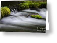 Mossy Rocks  Oregon 1 Greeting Card
