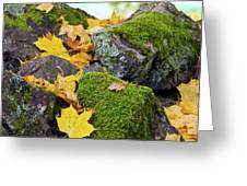 Mossy Stones And Maple Leaves Greeting Card