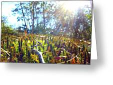 Mossy Sunburst Greeting Card