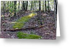 Mossy Trail Greeting Card
