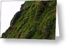 Mossy Tree 020 Greeting Card