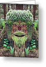 Mossman Tree Stump Greeting Card