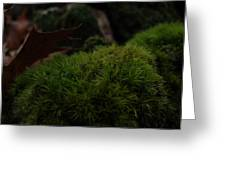Mossy Wood 002 Greeting Card