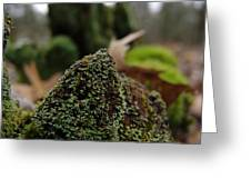 Mossy Wood 007 Greeting Card