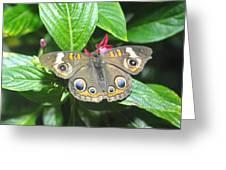 Moth 1 Greeting Card