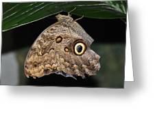 Moth 2 Greeting Card