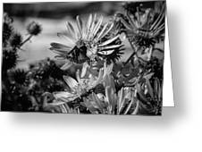 Moth And Flowers Greeting Card
