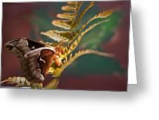 Moth At Sunrise Greeting Card