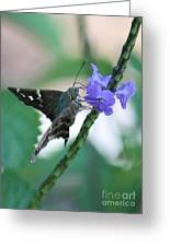 Moth On Blue Flower Greeting Card
