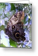 Moth On Blue Flowers Greeting Card