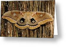 Moth On Cedar Tree Greeting Card