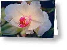 Moth Orchid 1 Greeting Card by Kate Word