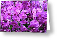 Moth Orchid Exuberance Greeting Card