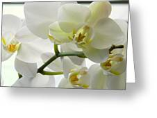 Moth Orchids - White Greeting Card