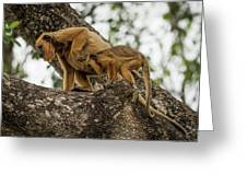 Mother And Baby Black Howler Monkeys Climbing Greeting Card