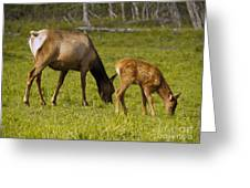 Mother Elk And Fawn Greeting Card