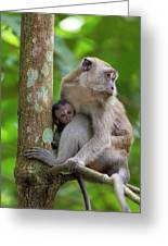 Mother And Baby Monkey Greeting Card