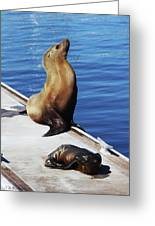 Mother And Baby Sea Lion At Oceanside  Greeting Card