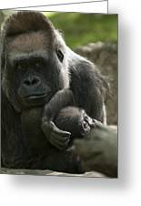 Mother And Child Gorillas4 Greeting Card
