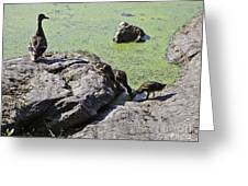 Mother And Her Ducklings Greeting Card