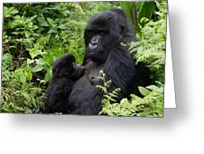 Mother And Suckling Baby Gorillas Greeting Card