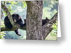 Mother Bear And Cubs Greeting Card