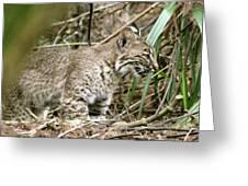 Mother Bobcat Greeting Card