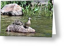 Mother Duck With Juveniles Greeting Card