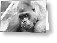 Mother Gorilla In Thought Greeting Card