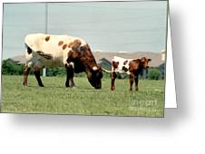 Mother Guarding Her Calf Greeting Card