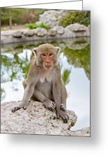 Mother Monkey Greeting Card
