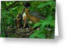 Mother Robin And Her Young Greeting Card