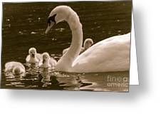 Mother Swan Greeting Card