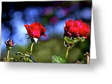 Mother's Day Roses Blank Greeting Card