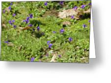 Mother's Violets Greeting Card