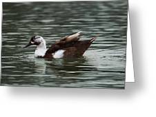 Mottled Brown Duck Greeting Card