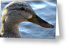 Mottled Duck Big Spring Park Crop Greeting Card