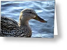 Mottled Duck Big Spring Park Greeting Card