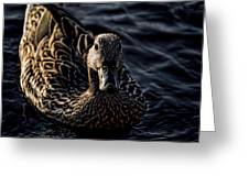 Mottled Duck In Big Spring Park Greeting Card